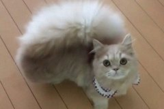 cat-fluffy-squirrel-tail-bell-7-5dca63b7b11a8__700